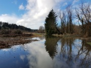 Water over Salmon Creek Greenway!