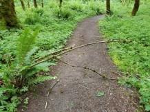 Fallen branch on trail