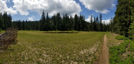 Meadow on PCT (Custom)