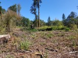 Oaks to Wetland Clearcut