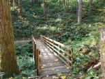 Bridge on Timber beast Trail (Medium)