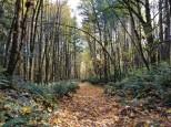 Bumping Knots Trail #1 (Medium)