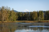 Mt. Hood at Steigerwald Lake (Medium)