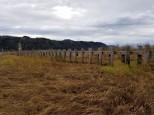 Columbia River Pilings (Custom)
