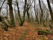 Ridge Trail 2 (Custom)