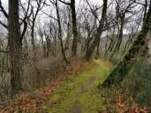 Ridge Trail 3 (Custom)