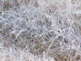 Frost on Grasses (Custom)
