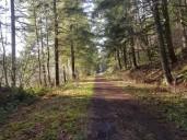 CZ Trail 1