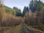 CZ Trail 2