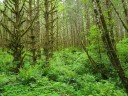 Lush Forest (Custom)